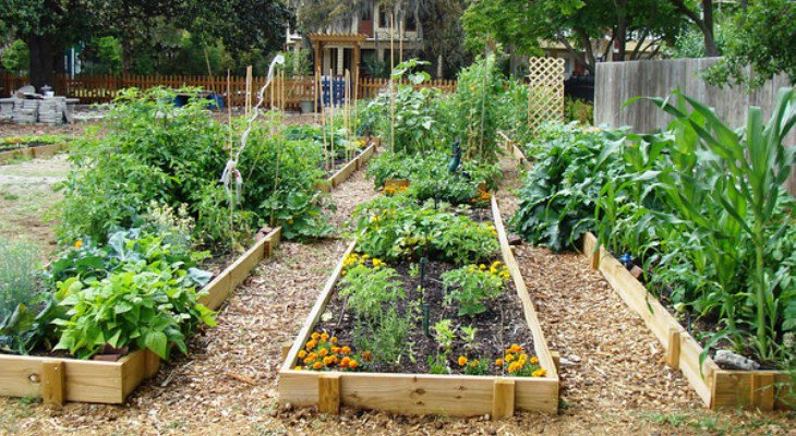 Easy sustainable garden ideas