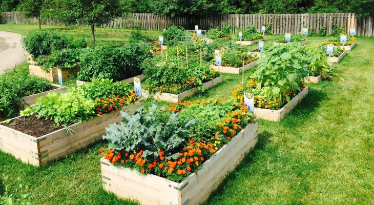 Sustainable garden planting ideas