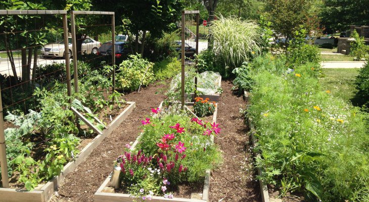 Sustainable living garden ideas