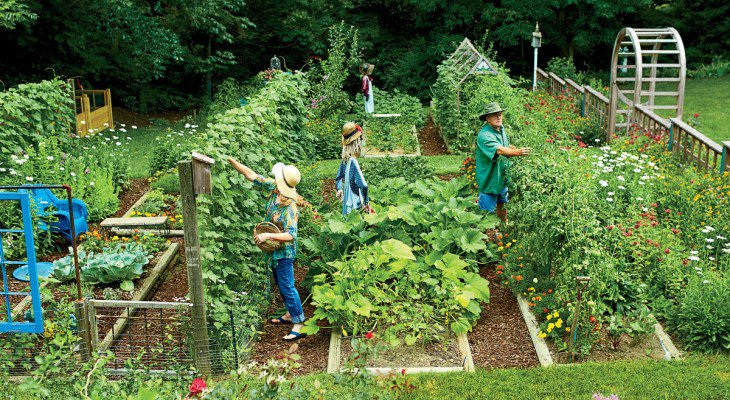 Sustainable vegetable garden design