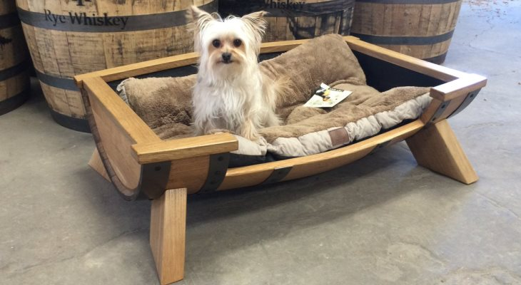 Furniture for Your Furry Friends